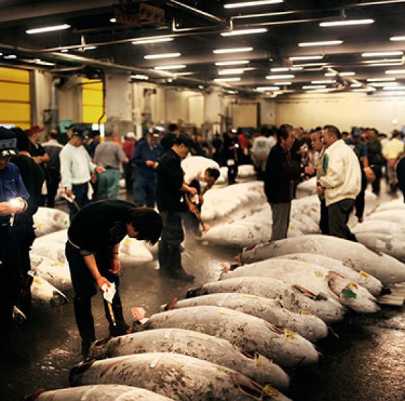 Chợ cá Tsukiji – địa chỉ ẩm thực cho người 'sành ăn' ở Tokyo