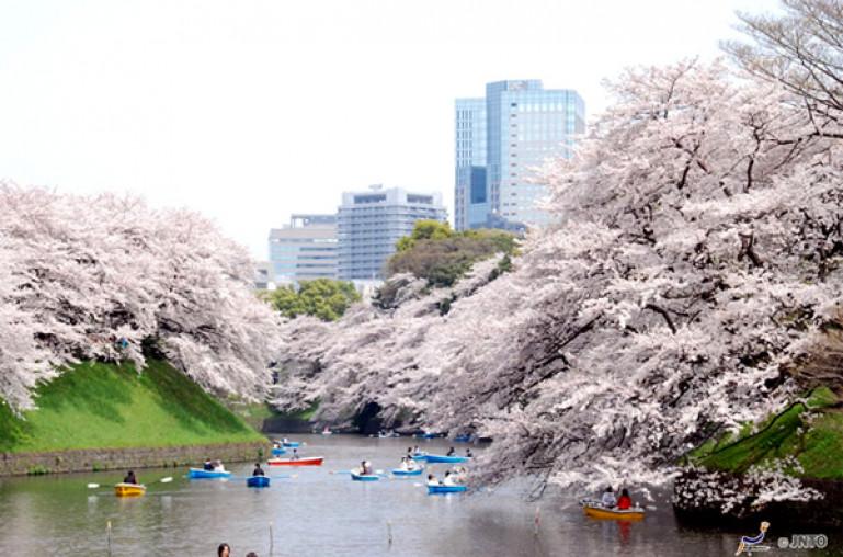 Tokyo – mùa nào cũng đẹp