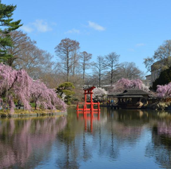 Cách quy hoạch vườn hoa Ibaraki ở Nhật