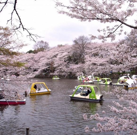Top 5 địa điểm hẹn hò siêu lãng mạn tại Tokyo !
