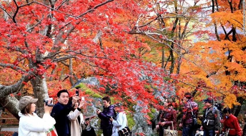 Vào mùa xuân, hai hàng cây anh đào dọc bờ sông Okazaki đua nhau nở, thu hút rất nhiều du khách Nhật Bản và quốc tế ghé thăm.