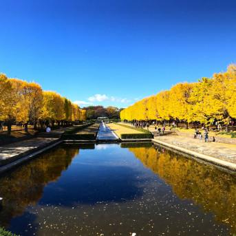 5 ĐỊA ĐIỂM TUYỆT VỜI NGẮM MÙA THU TẠI THỦ ĐÔ TOKYO