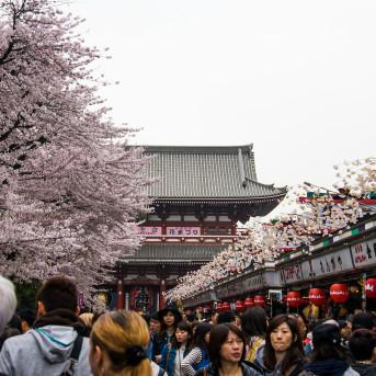 TOUR PHỔ THÔNG: TOKYO-PHÚ SĨ-NAGOYA-KYOTO-OSAKA-WAKAYAMA