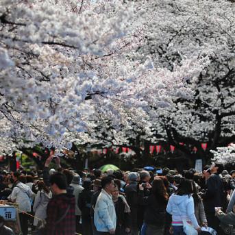 TOUR CAO CẤP: TOKYO - NÚI PHÚ SĨ - KYOTO - OSAKA - KOBE