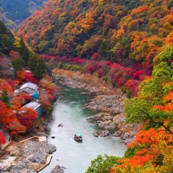 """Mùa Thu Nước Nhật - Vi Vu """"Cung Đường Vàng"""