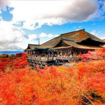 TOUR TIẾT KIỆM: MÙA THU NƯỚC NHẬT - LÀNG CỔ SHIRAKAWAGO
