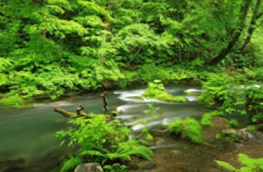 Vùng Tohoku