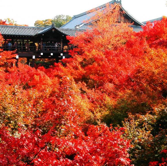 Ấn tượng mùa thu Nhật Bản