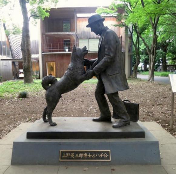 Chó Hachiko – biểu tượng về lòng trung thành của Nhật Bản