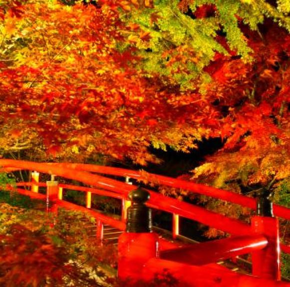 Những điều có thể bạn chưa biết về lá đỏ (紅葉) ở Nhật Bản