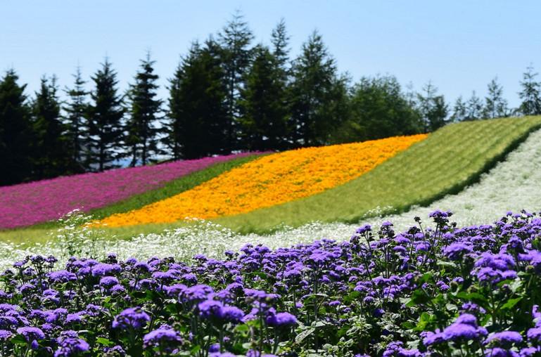 Tổng quan về Hokkaido