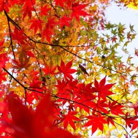 Nhật bản bốn mùa