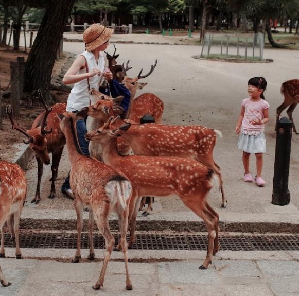 Nara cổ - Thành phố của những di tích văn hóa