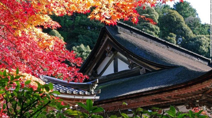 Nằm trên dãy Suzuka, Saimyoji là một trong ba ngôi đền Phật giáo Tendai ở phía đông Shiga. Đền Saimyoji nổi tiếng với tán lá màu đỏ và cam bao quanh khi mùa thu đến và sắc hồng của hoa anh đào mỗi độ xuân về.