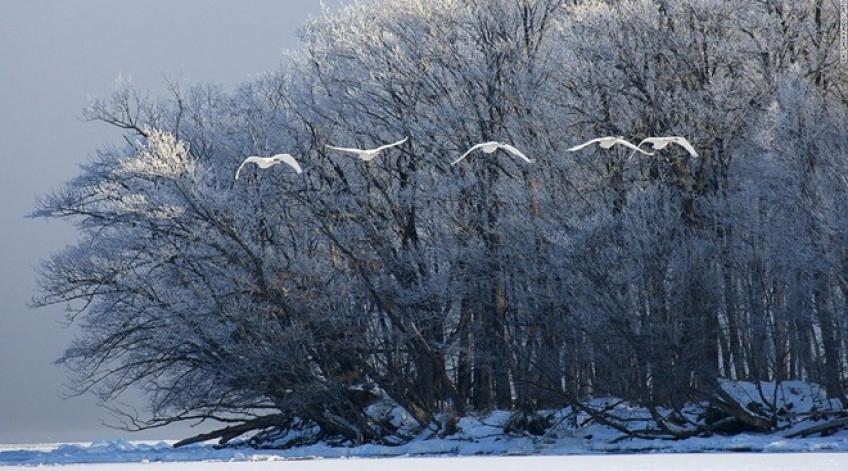 Mỗi mùa đông, hơn 300 con thiên nga lại tới trú ở hồ Kussharo. Các suối nước nóng khiến dải nước gần bờ không bị đóng băng. Báo chí bắt đầu đưa tin về một con quái vật xuất hiện ở đây từ năm 1973, khiến Kussharo còn được gọi là hồ Loch Ness của Nhật.