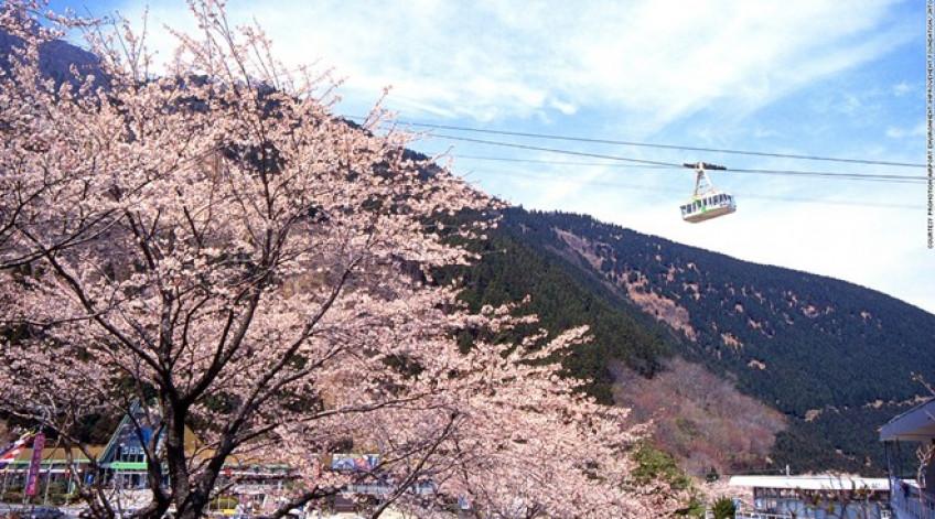 Tuyến cáp treo này có thể đưa 101 hành khách lên đỉnh núi Tsurumi ở độ cao 1.375 m trong 10 phút. Vào mùa xuân, từ trên đỉnh núi, du khách có thể chiêm ngưỡng khung cảnh lộng lẫy khi hơn 2.000 cây anh đào nở hoa.