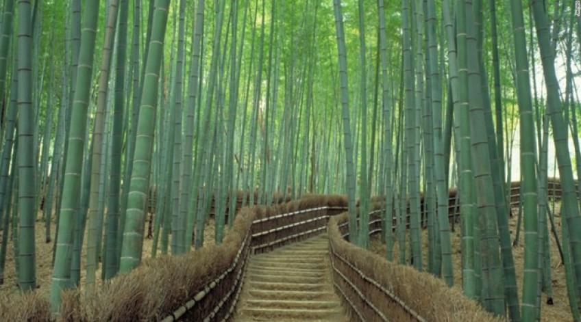Được coi là một trong những khu rừng đẹp nhất thế giới, những cây tre xanh mướt đung đua trong gió tạo cho nơi này một không khí huyền ảo, thần tiên.