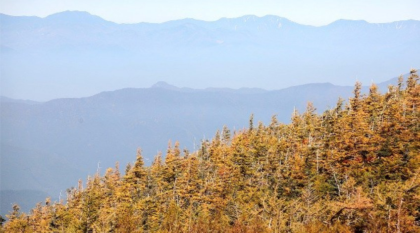 Lá vàng của một cánh rừng gối lên các dãy núi xa mờ